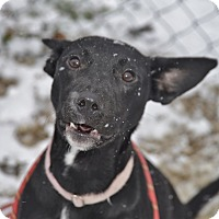 Adopt A Pet :: Raven - Meridian, ID