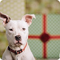 Adopt A Pet :: Foster - Portland, OR