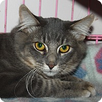 Adopt A Pet :: Thistle - North Branford, CT