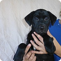 Adopt A Pet :: Chase - Oviedo, FL