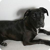 Adopt A Pet :: Lana - Redding, CA