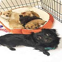 Adopt A Pet :: *DAPHNE - Hanford, CA