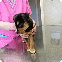 Adopt A Pet :: Pinky - Bloomingdale, IL