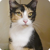 Adopt A Pet :: Sadie (cat) - Knoxville, TN
