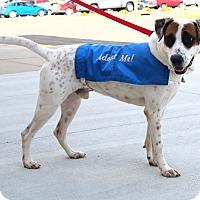 Adopt A Pet :: Gatsby - Rochester, MN