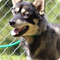 Husky Mix Dog for adoption in Baltimore, Maryland - Willow