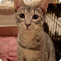 Adopt A Pet :: Furrnando - Sacramento, CA
