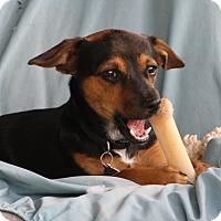 Adopt A Pet :: Carol - Edmonton, AB