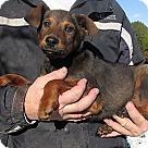 Adopt A Pet :: Jayne