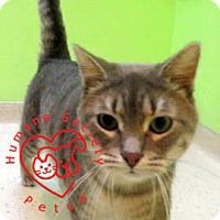 Adopt A Pet :: Mickey Allen - Janesville, WI