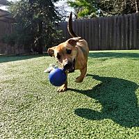 Adopt A Pet :: Jem - Dublin, CA