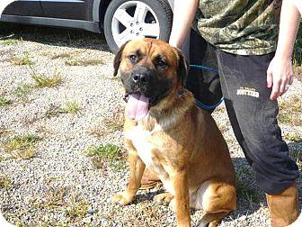 Mastiff Mix Dog for adoption in Zanesville, Ohio - # 387-12  ADOPTED!