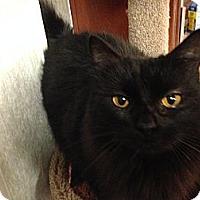 Adopt A Pet :: Mickey - Pace, FL