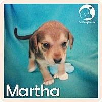 Adopt A Pet :: Martha - Novi, MI