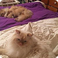 Adopt A Pet :: RUPERT & FINN - Ridgewood, NY