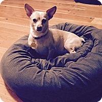 Adopt A Pet :: Ellie - Berkeley, CA