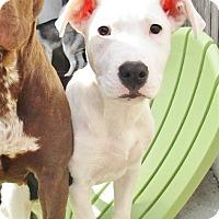 Adopt A Pet :: Jack - 4 months old - Charleston, SC