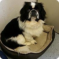 Adopt A Pet :: Brutus West - Urbana, OH