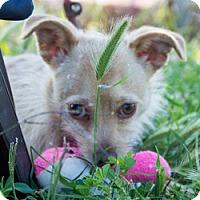 Adopt A Pet :: Joni - Patterson, CA