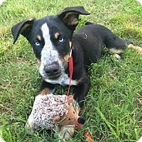 Adopt A Pet :: Milo - Manassas, VA