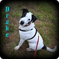 Adopt A Pet :: Drake - Denver, NC
