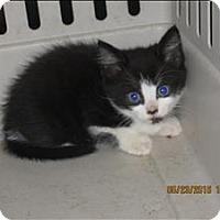 Adopt A Pet :: 16-05-1508b - Dallas, GA