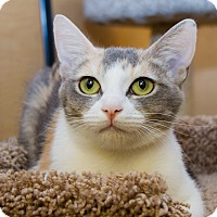 Adopt A Pet :: Lilly - Irvine, CA