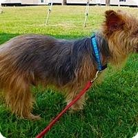 Adopt A Pet :: Tiger-071403j - Tupelo, MS