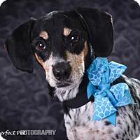 Adopt A Pet :: Roket - Miami, FL
