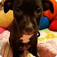 Adopt A Pet :: Fergie - Hockessin, DE