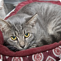 Adopt A Pet :: Bert (Neutered) - Marietta, OH