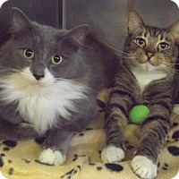 Adopt A Pet :: Greyson and Gabe - Martinsburg, WV