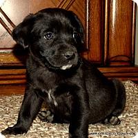 Adopt A Pet :: BAILEY/ADOPTED - Waterbury, CT