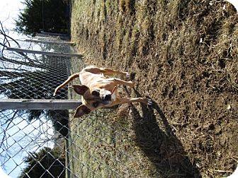 Boxer/Terrier (Unknown Type, Medium) Mix Dog for adoption in Valley Falls, Kansas - Nala