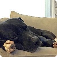 Adopt A Pet :: Jimmy - Northville, MI