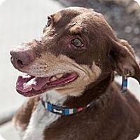 Adopt A Pet :: Jasper - Arden, NC