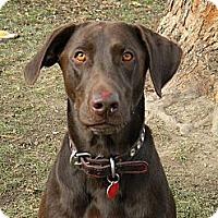 Adopt A Pet :: Wilson - Monteregie, QC