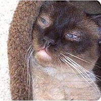 Adopt A Pet :: Kung Pao - El Cajon, CA