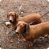 Adopt A Pet :: MIKE & IKE - Portland, OR