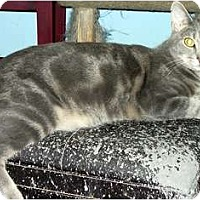 Adopt A Pet :: Frodo - Alexandria, VA