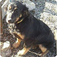 Adopt A Pet :: Puppy - Glenpool, OK