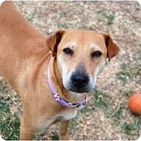 Adopt A Pet :: MACY - Phoenix, AZ