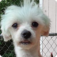 Adopt A Pet :: Ernie - Crump, TN
