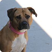 Labrador Retriever Mix Dog for adoption in Brookhaven, New York - Mama