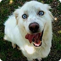 Adopt A Pet :: Ralph - Hixson, TN