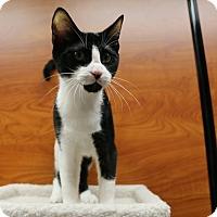Adopt A Pet :: Rabbit - Greensboro, GA