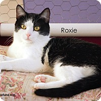 Adopt A Pet :: Roxie - St Louis, MO
