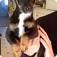 Adopt A Pet :: Blanche (ARSG) - Santa Ana, CA