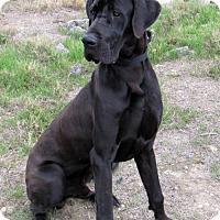 Adopt A Pet :: Dez - SAN PEDRO, CA
