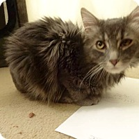 Adopt A Pet :: Parker -Adoption Pending! - Colmar, PA